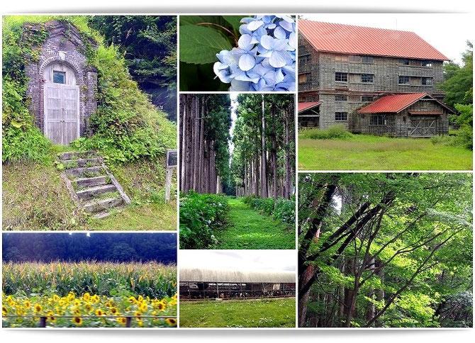 ガイド付きバスツァー「小岩井農場めぐり」にて、農場内をあちこちと見学しました。