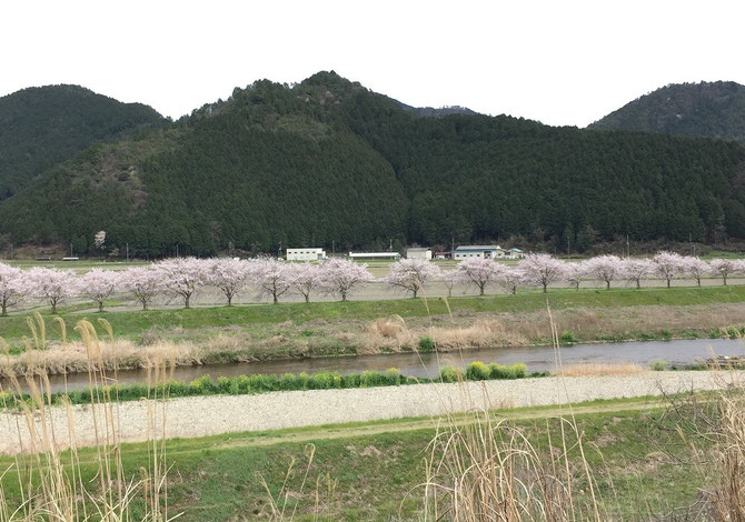 芦田ポートリー 鶏舎 桜