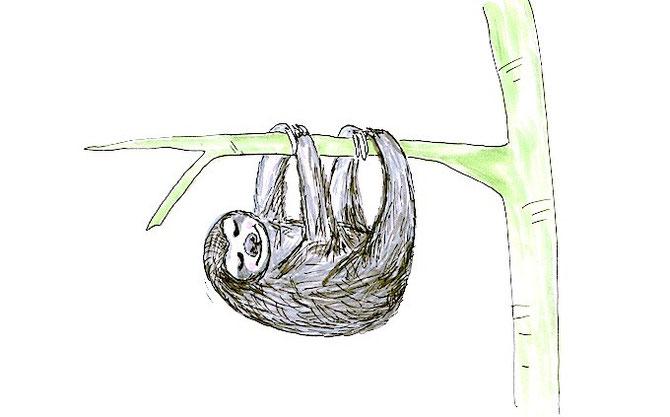 Bild: Faultier / gezeichnet von develloppa