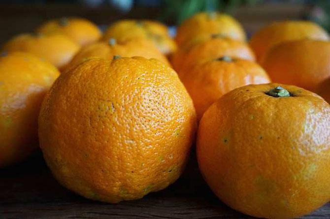 Pomeranzen für köstliche Bitterorangenmarmelade / develloppa