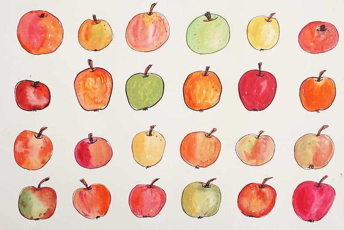 Äpfel, Aquarell+Fineliner (develloppa)