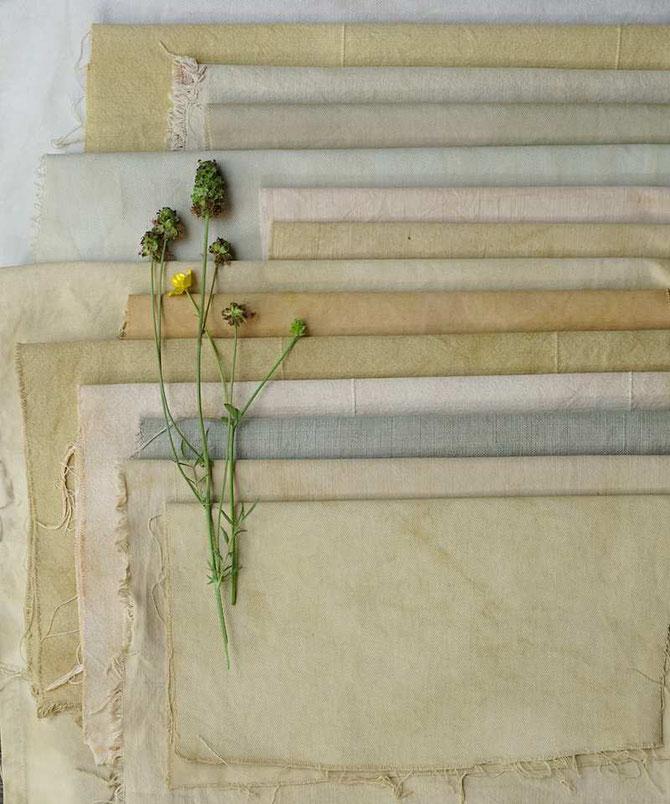 Baumwollstoffe wurden mit Pflanzen aus dem Garten gefärbt (develloppa)