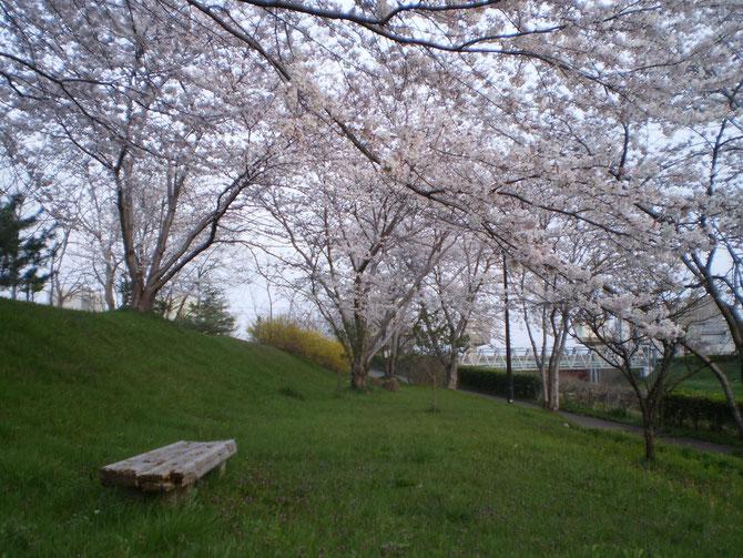 夕刻6時。施設から車で約1分のところにある「新堀川公園」。桜と新緑のコラボレーション。ベンチに座ってのんびり過ごしてみたいなぁ