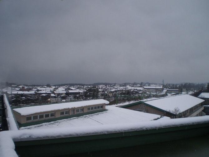 今日のうみまち。松林の先は日本海。一年ぶりの雪景色になぜか、こころがホッとしました