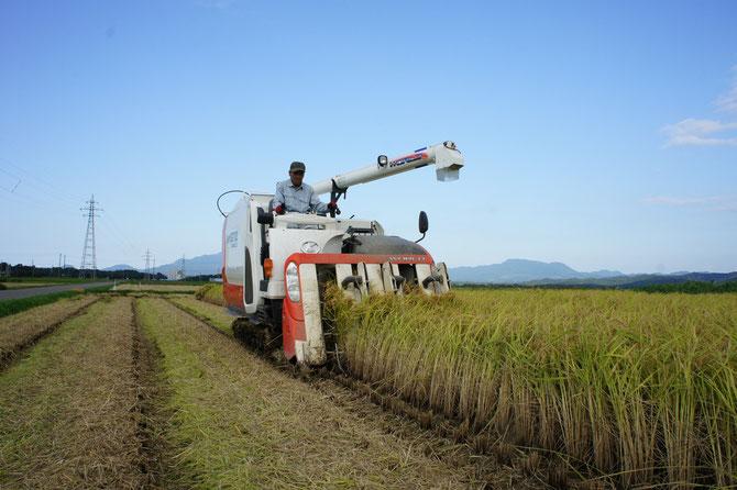 地元・大潟区蜘ケ池(くもがいけ)地区での稲の収穫作業。農家の皆さん、お忙しい中、たいへんありがとうございました