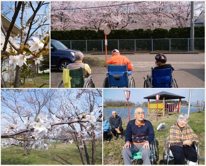 うららかな春の陽気に、心もほっこり。(上段左:施設中庭、上段右:犀潟鉄工所の桜、下段:柿崎区・坂田池)