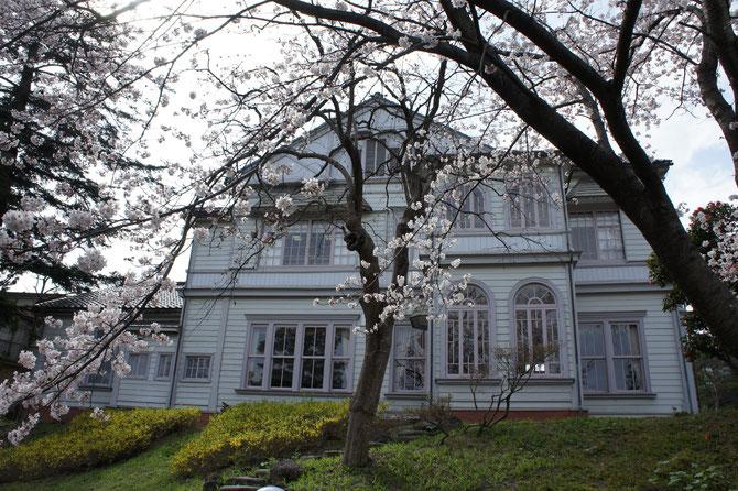 お花見の帰り道。青田川近くに建つ「旧師団長官舎」。明治43年(1910年)に建てられた歴史的建造物。入場無料