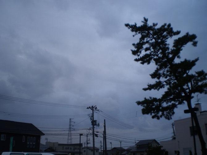 鉛色の空に包まれたうみまち。松の木も半年ぶりに冷たい風にあおられていました。