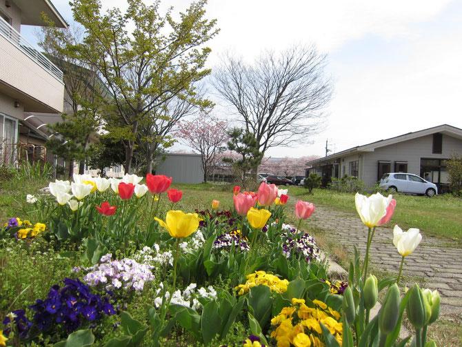 施設の中庭。色とりどりの花がお出迎え。その先にある、犀潟鉄工所の桜も、今もなお咲き続けてくれています