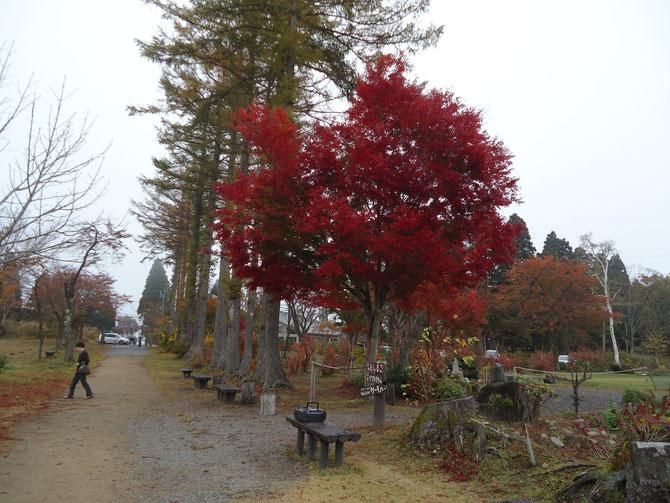 「マツケン・サンバ」でつながった秋の妙高。そのとき、私のほっぺは、紅葉のごとく、赤く染まっていました