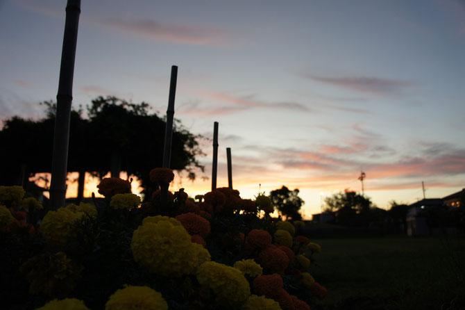 今日の夕刻7時半。夕涼みに近くの公園へ。明日も熱い一日となりそうです