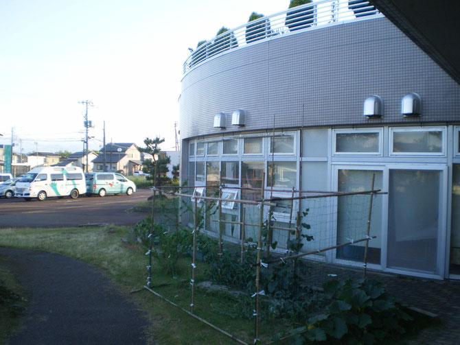 今日の夕方。厚い雲に覆われていたうみまちにも、青空がひろがってきました。ネットに包まれた野菜たち。今年は安心です!
