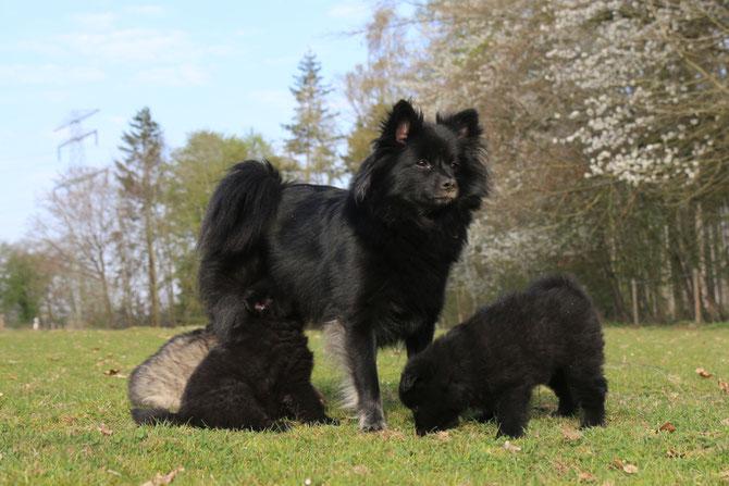 Jaras erster Wurf: Jengar, Jeron, Johanna und Jandir