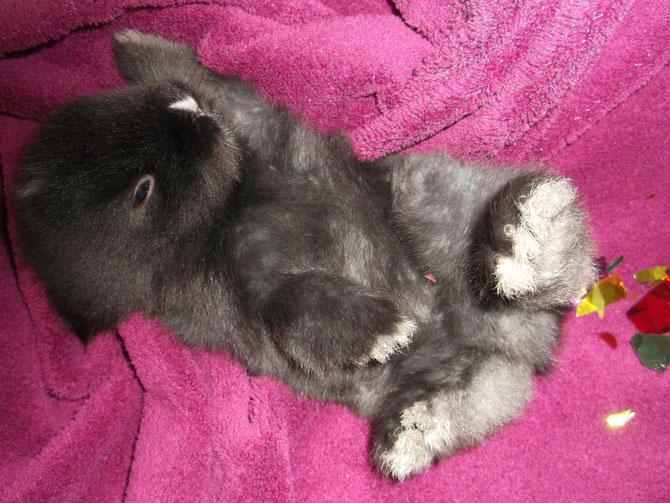 Nox de Chantilly & Chamallow (photo du 4 janvier 2015) . Une petite sieste !!!