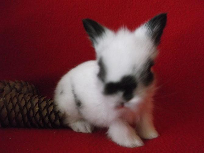 Mon bébé coup de coeur de Gaufrette & Chamallow !! La petite Maya !!