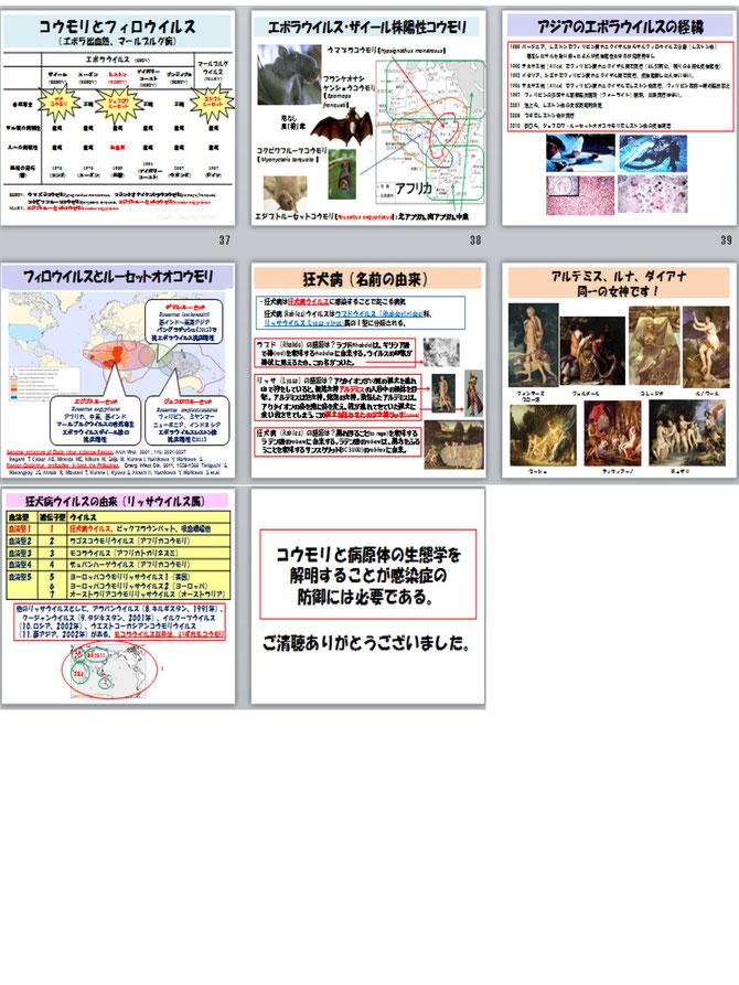 コウモリと感染症 - animalcrisi...