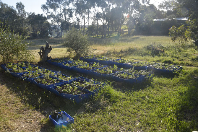 The original Permachar Kitchen Garden (PKG)