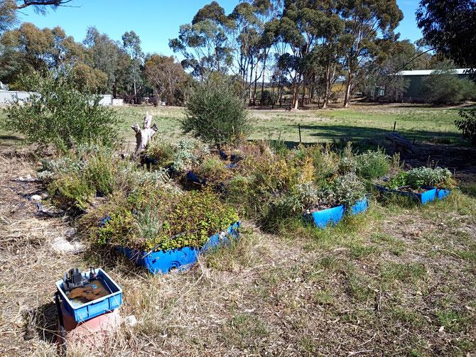 The Permachar Kitchen Garden (PKG)