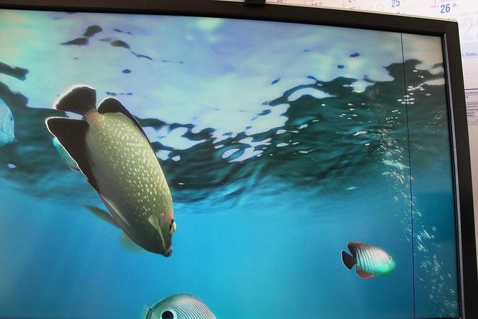 Monitor mit Bildschimschoner Aquarium