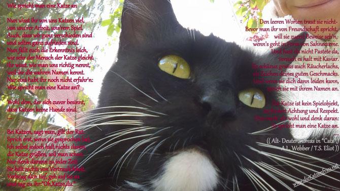 Catsitter Saarland - Die Katzenfrau