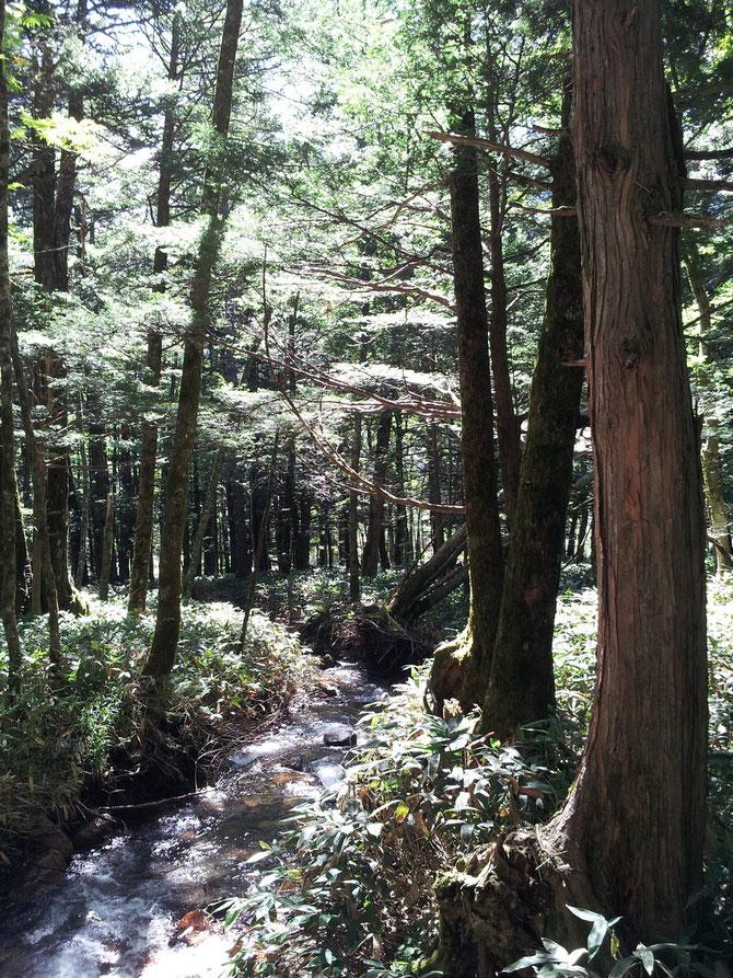 上高地の森