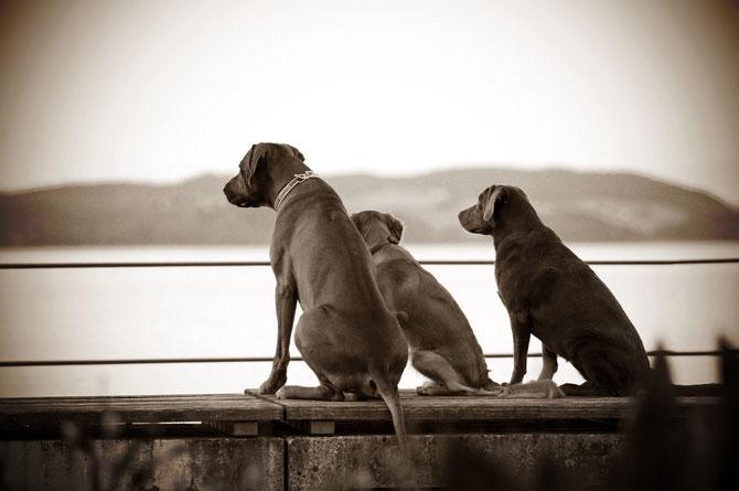 Drei Freunde - Dayo & Emma & Chelsea