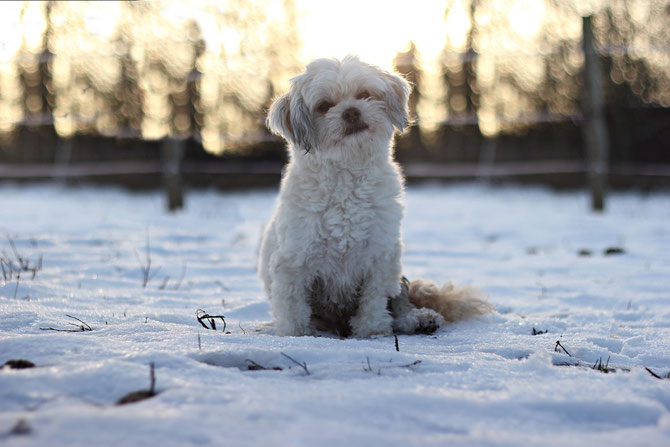 """mein Hund """"Rudi"""""""