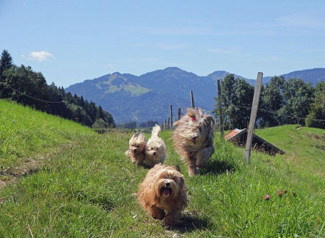 Spaß im Urlaub mit Hund in den Bergen