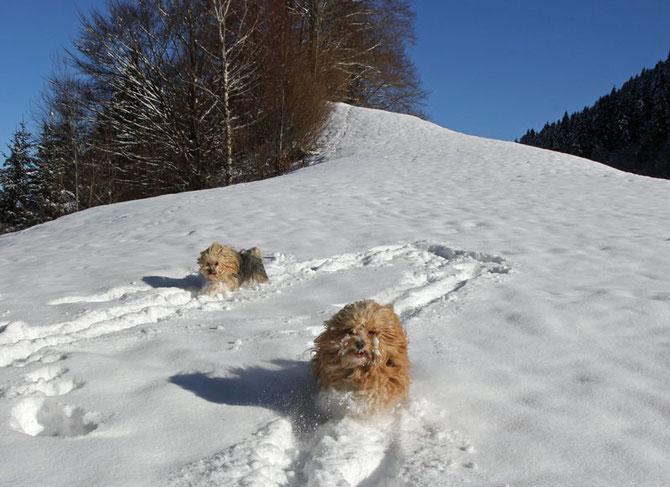 Hundeurlaub im Schnee