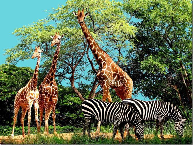ホノルル動物園 Honolulu Zoo ハワイ