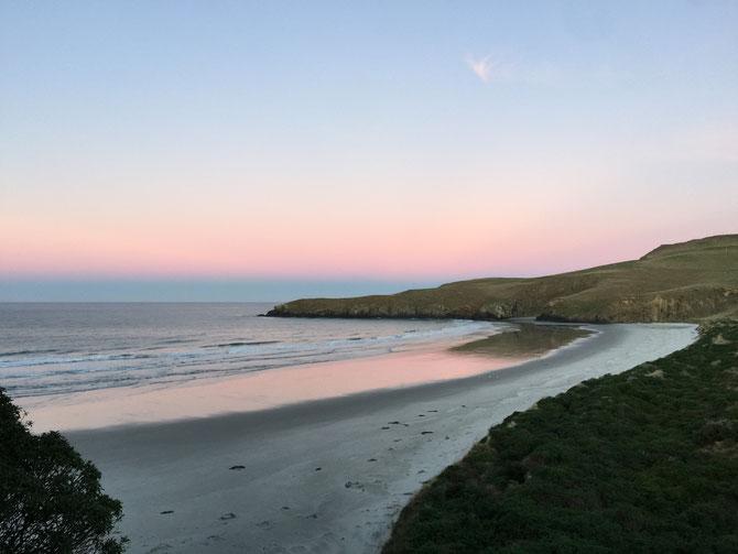 ニュージーランド オタゴ湾 ペンギン・プレイス