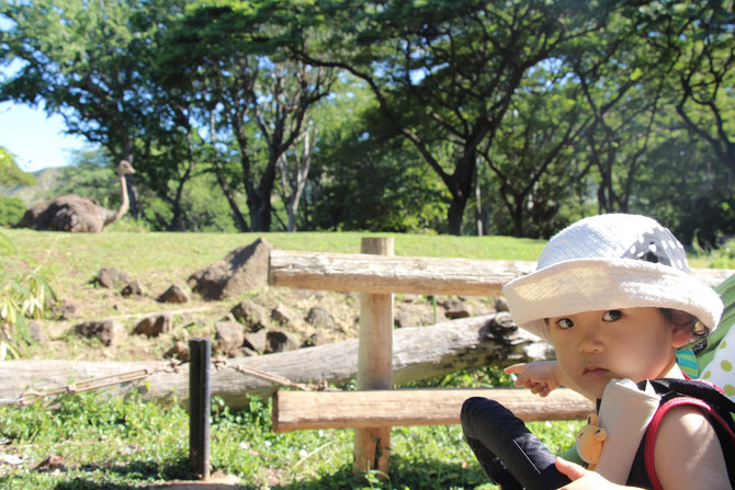 ハワイ 動物園 Honolulu Zoo