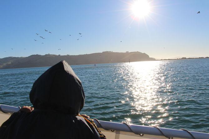 ニュージーランド ダニーデン エコツアー