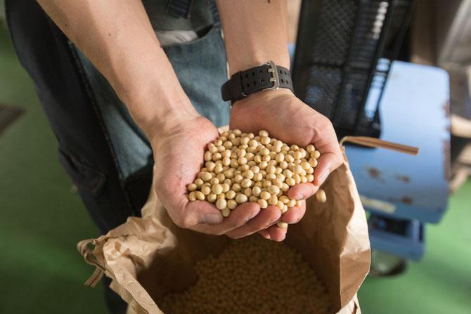 大豆にはたんぱく質が豊富に含まれている