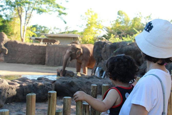 ホノルル動物園 ハワイ Honolulu Zoo