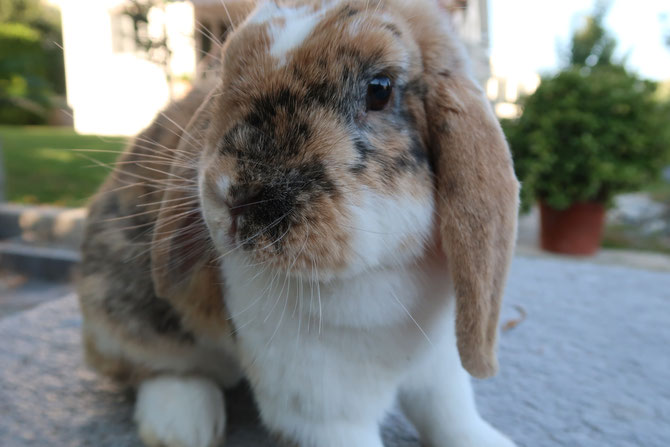 Ein rundum gesundes Kaninchen