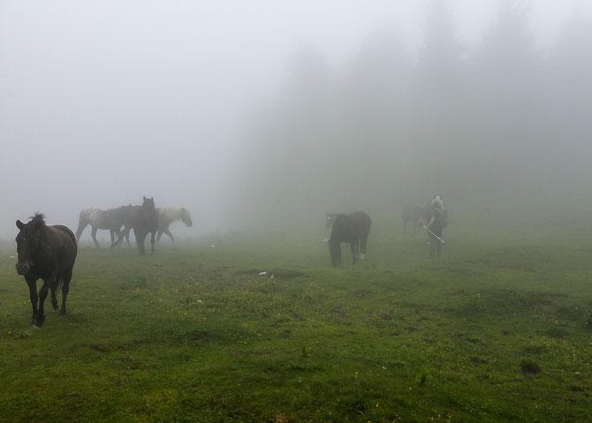 Wie Geister aus dem Nebel