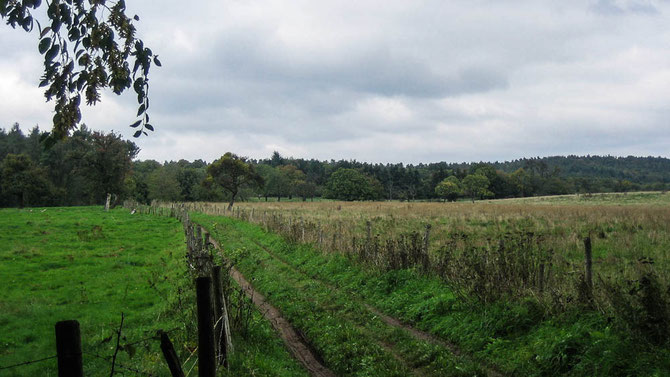 Abwechslungsreich. Wald. Wiesen. Felder. Ausblicke.