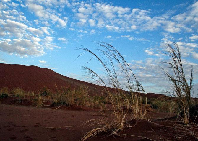 Ganz früh morgens in der Namib