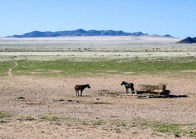 Zwei der ca 180 Wüstenpferde um Garub.