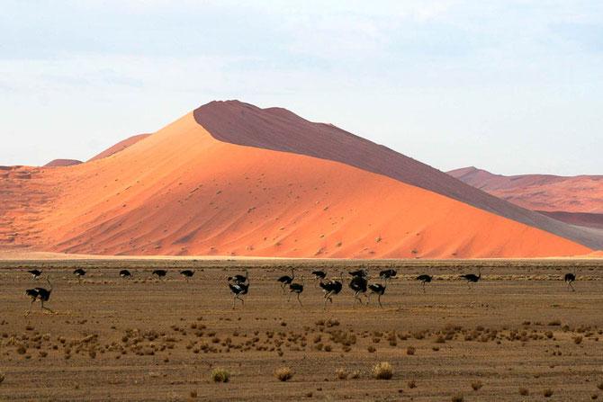 Die haushohen Dünen der Namib. Hier auf dem Weg zur Düne 45, die es zu erklimmen gilt