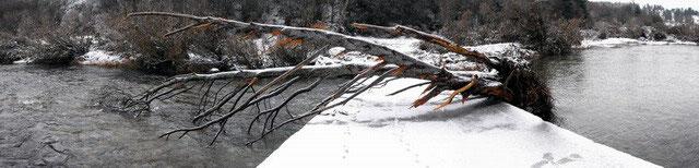 Arbre déraciné le 2/11/2008