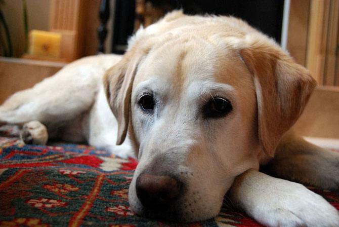 Der Hund macht kleine Pause -  Blockhaus, Holzhaus, Holz, Wohnhaus, Haus, Eigenheim, Architektenhaus, Garten, Planung, Zuhause, Winter, Reinigung, Hygiene, Tierhaltung, Hund, Tiere, Schlangen, Ratten