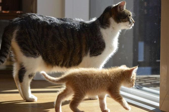 Katzen im Haus - Foto Pixabay