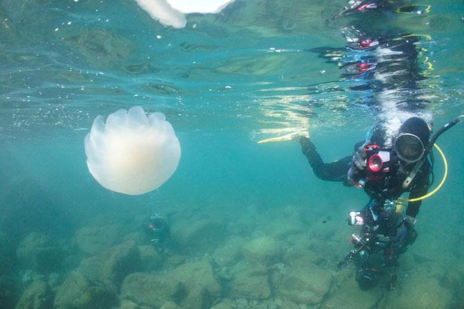 水中ワイド写真撮影イメージ