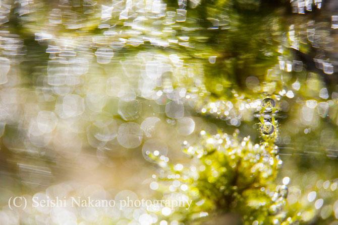 水中写真ガイド 水中写真家リンクページ