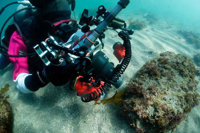 水中写真ガイド ダイビング風景
