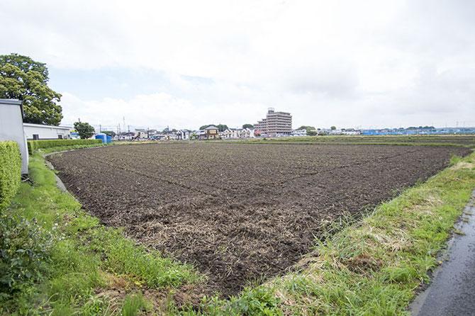 荒起こしを終えた田んぼは、田植えに向けて一段階進んだことを教えてくれる。蔵が位置する海老名市下今泉付近は農地と宅地がとても近い。ちなみに右奥に見える青いネットに囲まれた「市民農園」では、夏野菜の苗が植え付けられていた。