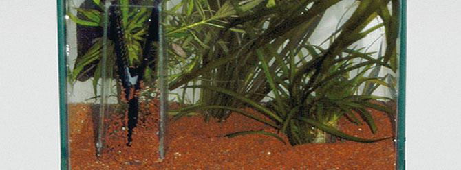 Der Bodengrund in einem Aquarium sollte regelmäßig mit einer Mulmglocke abgesaugt werden um sich darin abgesetzte Futterreste und Phosphat zu entfernen. Foto: JBL, Heiko Blessin