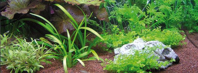 Schritt für Schritt zu einem schönen Garnelen-Aquarium. Foto: Michael Wolfinger